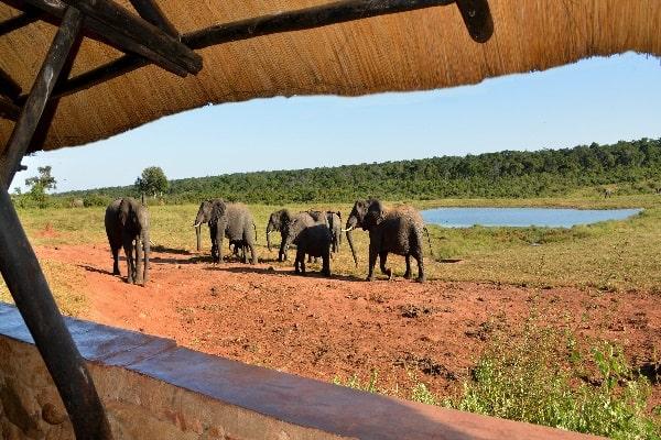 Ivory-lodge-game-viewing-hwange-zimbabwe