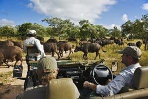 Encounter Africa Kruger South Africa