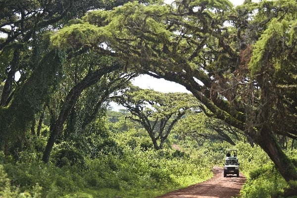 The-Highlands-NgorongoroRoad-tanzania