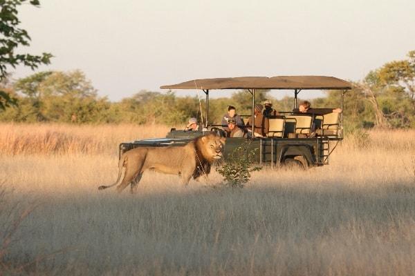 camp-hwange-zimbabwe-game-drive-safari