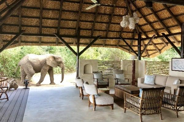 chiawa-camp-elephant-lower-zambezi-zambia