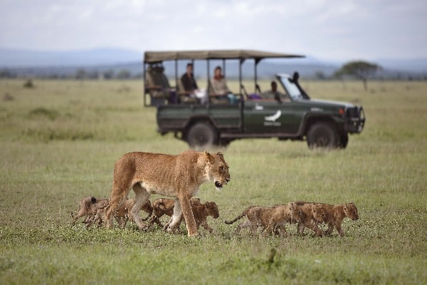 grumeti-serengeti-camp-game-drive-tanzania