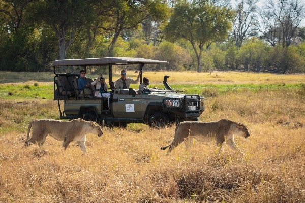 machaba-camp-game-drives-moremi-botswana