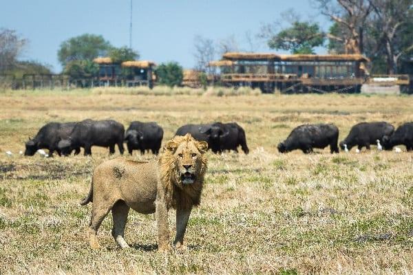 shumba-camp-lodge-exterior-kafue-zambia