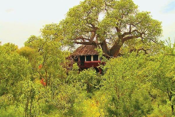 tarangire-treetops-tanzania